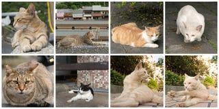 Accumulazione dei gatti Immagine Stock Libera da Diritti