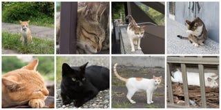 Accumulazione dei gatti Fotografia Stock
