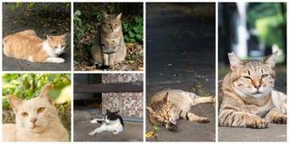Accumulazione dei gatti Fotografie Stock Libere da Diritti