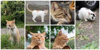 Accumulazione dei gatti Immagini Stock Libere da Diritti