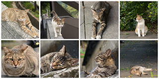 Accumulazione dei gatti Fotografie Stock