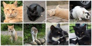 Accumulazione dei gatti Fotografia Stock Libera da Diritti