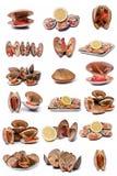 Accumulazione dei molluschi. Fotografia Stock