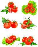 Accumulazione dei pomodori con la filiale verde. Isolato Fotografie Stock Libere da Diritti