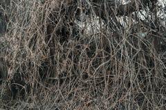 Accumulazione dei rami asciutti Fotografia Stock