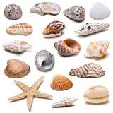 Accumulazione dei Seashells. Fotografia Stock