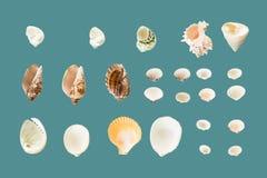 Accumulazione dei seashells Fotografie Stock
