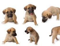 Accumulazione del cane Immagine Stock Libera da Diritti