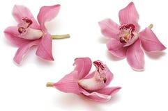 Accumulazione del fiore dell'orchidea Immagine Stock Libera da Diritti