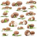 Accumulazione del fungo fresco Fotografia Stock