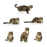 Accumulazione del gatto Fotografia Stock Libera da Diritti