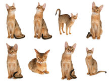 Accumulazione del gatto Immagine Stock Libera da Diritti