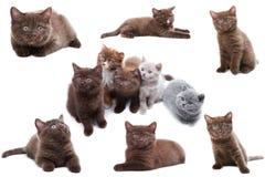 Accumulazione del gatto su priorità bassa bianca Fotografie Stock