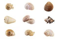 Accumulazione del mosaico del Seashell Fotografia Stock Libera da Diritti