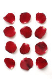 Accumulazione del petalo rosso Immagine Stock Libera da Diritti