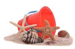 Accumulazione del Seashell Immagine Stock Libera da Diritti