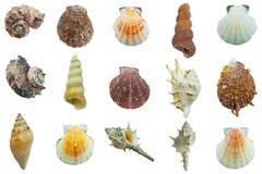 Accumulazione del Seashell isolata su priorità bassa bianca Immagine Stock