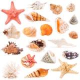 Accumulazione del Seashell isolata su priorità bassa bianca Fotografie Stock Libere da Diritti