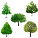 Accumulazione dell'albero Fotografia Stock