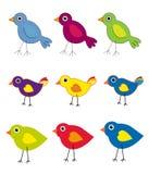 Accumulazione dell'uccello Immagine Stock