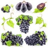 Accumulazione dell'uva scura matura Fotografie Stock Libere da Diritti
