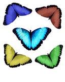 Accumulazione della farfalla di Morpho Fotografie Stock Libere da Diritti