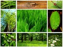 Accumulazione della foresta Immagine Stock