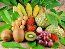 Accumulazione della frutta tropicale Immagine Stock