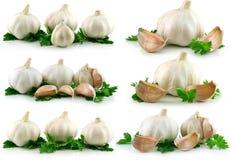 Accumulazione della verdura dell'aglio con prezzemolo verde Immagini Stock Libere da Diritti