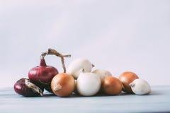 Accumulazione delle cipolle Fotografia Stock