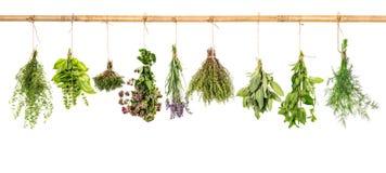 Accumulazione delle erbe fresche Il basilico, salvia, aneto, timo, menta, laven Immagini Stock Libere da Diritti