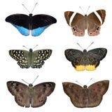 Accumulazione delle farfalle colorate Fotografie Stock
