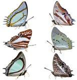 Accumulazione delle farfalle colorate Immagine Stock Libera da Diritti