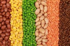 Accumulazione delle lenticchie, dei piselli, dei fagioli e del cereale Immagini Stock Libere da Diritti