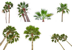 Accumulazione delle palme Fotografia Stock Libera da Diritti