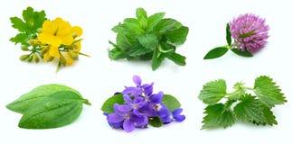 Accumulazione delle piante Fotografia Stock Libera da Diritti