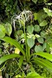 Accumulazione delle piante tropicali Immagine Stock