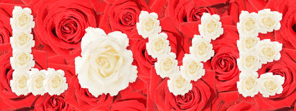 Accumulazione delle rose rosse Fotografie Stock Libere da Diritti