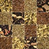 Accumulazione delle spezie e delle erbe differenti Immagine Stock Libera da Diritti