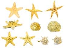 Accumulazione delle stelle marine Immagini Stock Libere da Diritti