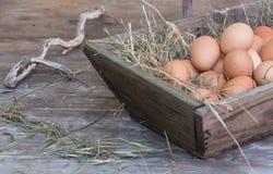 Accumulazione delle uova Immagini Stock Libere da Diritti