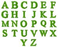 Accumulazione di alta risoluzione della fonte tipografica dell'erba Immagine Stock