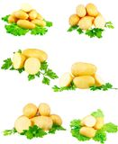 Accumulazione di giovani patate, prezzemolo. Isolato Immagini Stock