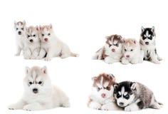 Accumulazione di piccolo cucciolo Immagini Stock