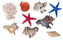 Accumulazione isolata degli invertebrati del mare Fotografia Stock