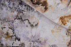 Accumulazione nera della muffa nell'angolo di vecchia casa sviluppo di muffa sotto la carta da parati Fotografie Stock Libere da Diritti