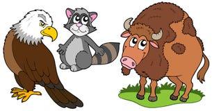 Accumulazione nordamericana degli animali Immagine Stock Libera da Diritti