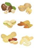 Accumulazione Nuts Fotografia Stock