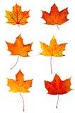 Accumulazione rossa delle foglie di acero di autunno Immagini Stock Libere da Diritti