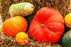 Accumulazione variopinta delle zucche sul servizio di autunno Immagini Stock Libere da Diritti
